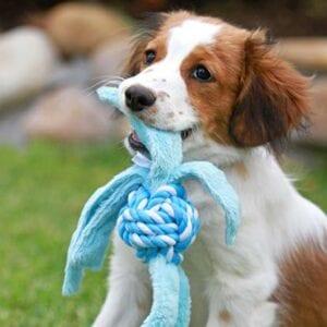 shop-Pupz-Cowboyz-Blue_4