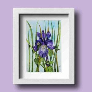 Glorious Iris