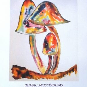 Magic Mushrooms LE