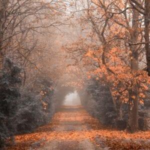 Avenue To Durrow Abbey