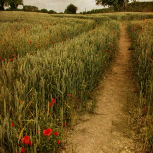 Down where the poppies grow.