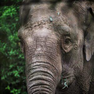 Elephant through the trees Dublin Zoo