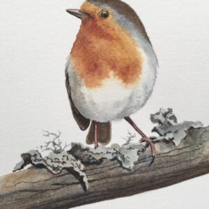 Robin painting : On the branch with lichens